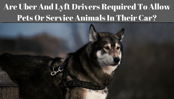 Uber Lux Cars >> Are Uber And Lyft Drivers Required To Allow Pets Or ...